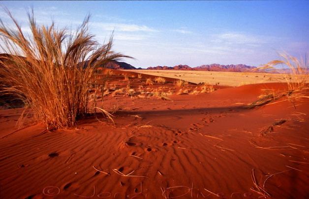 Parc Nacional Namib-Naukluft, Namíbia