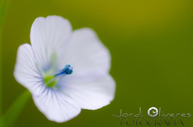 1605_flora_11420